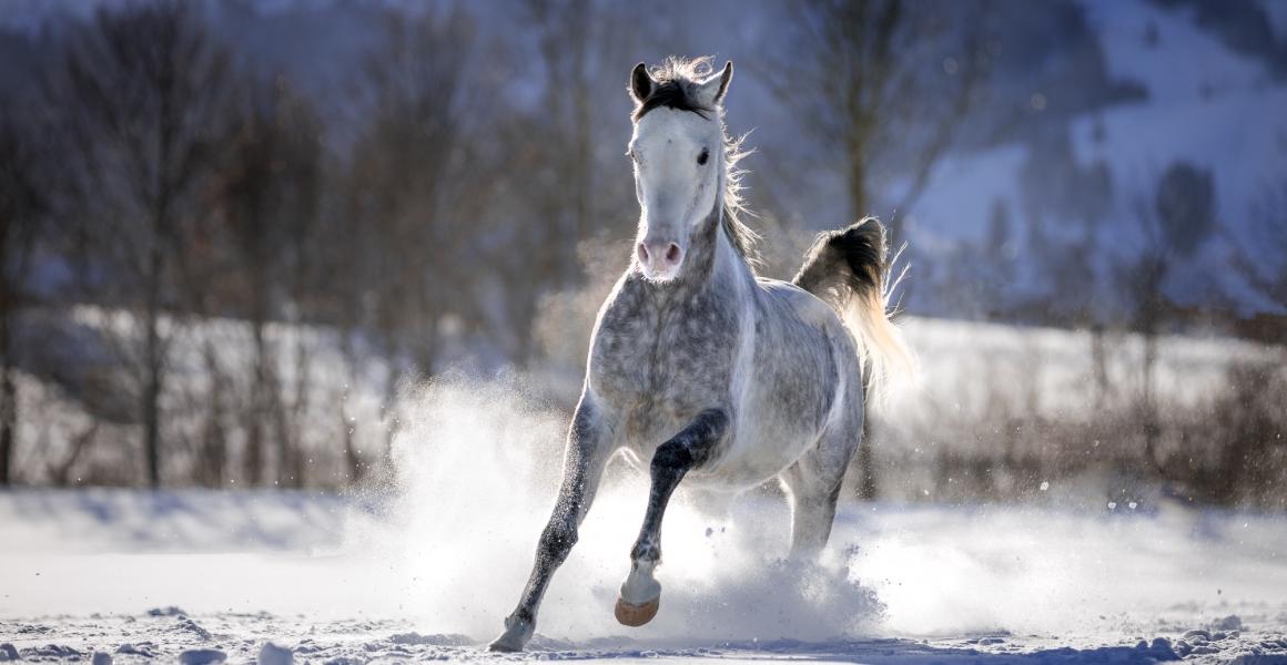 Pferdefotografie Ingrid Feuerecker