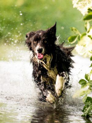 Hund Fotoshooting Bach