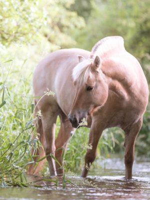 Pferd im Bach Fotoshooting