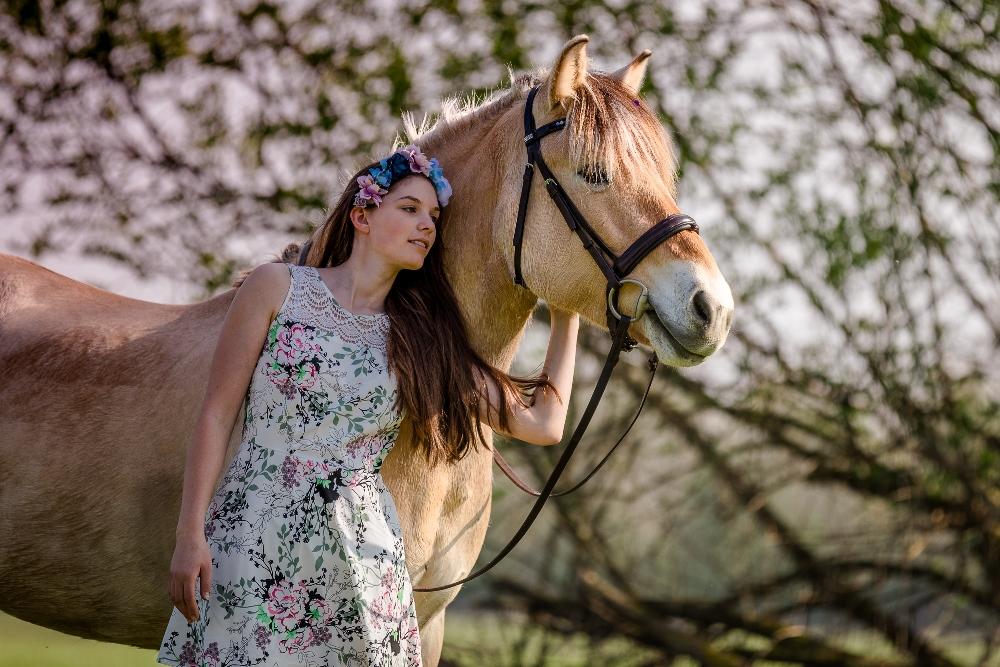Pferdefotoshooting Gefährten
