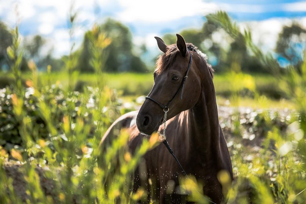 Pferdefotoshooting bleibende Erinnerung